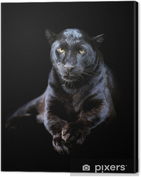 Cuadro en Lienzo Leopardo negro - Mamíferos