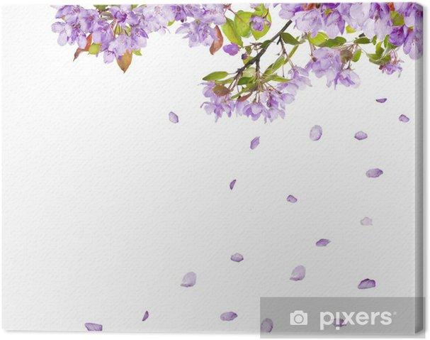 Cuadro en Lienzo Lila ramas de los árboles de flores y caída de ...