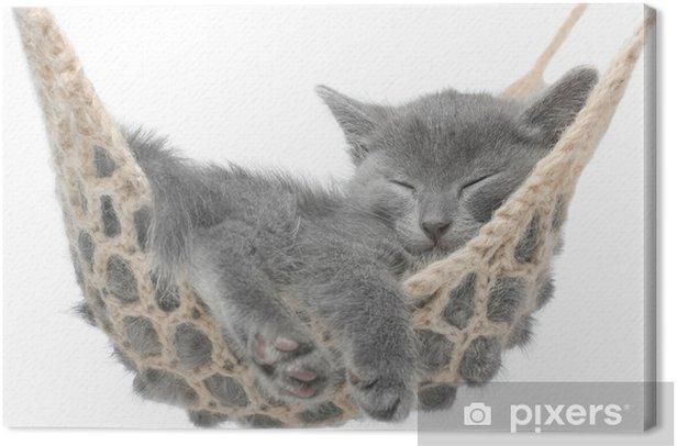 Cuadro en Lienzo Lindo gatito gris acostado en la hamaca - Vacaciones