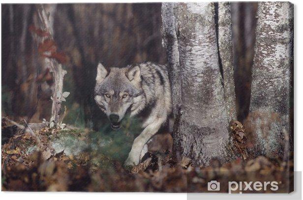 Cuadro en Lienzo Lobo gris en el bosque - Lobos