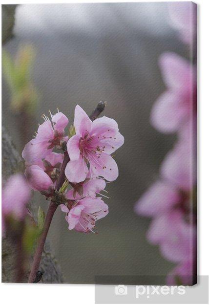 Cuadro En Lienzo Macro Flor De Tonos Pastel Primavera