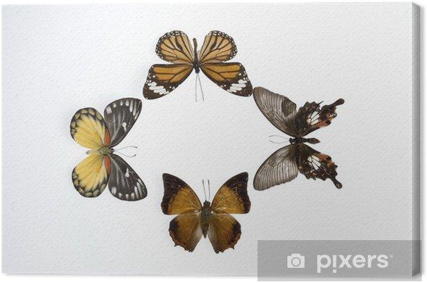 Cuadro en Lienzo Mariposas7852 - Otros Otros