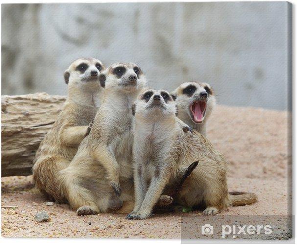 Cuadro en Lienzo Meerkats - Mamíferos