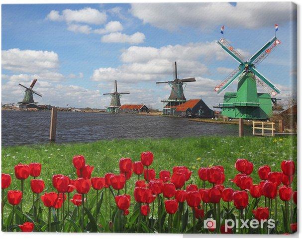 Cuadro en Lienzo Molinos de viento holandeses tradicionales con tulipanes rojos, Amsterdam, Holanda - Molinos de viento