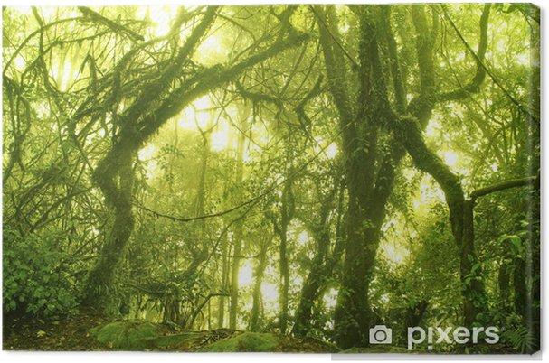 Cuadro en Lienzo Mossy bosque - Temas