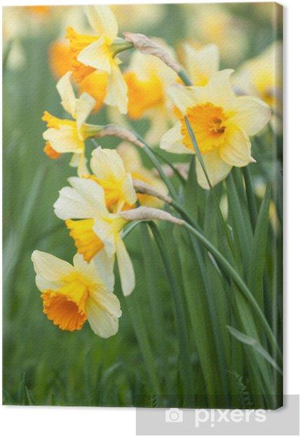 Cuadro En Lienzo Narcisos Amarillos Pixers Vivimos Para Cambiar - Narcisos-amarillos