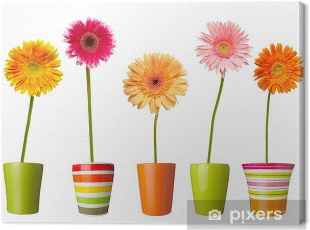 Cuadro en Lienzo Naturaleza, flor, jardín botánico margarita flor olla - Flores