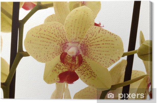 Cuadro en Lienzo Orchidee - Flores