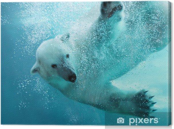 Cuadro en Lienzo Oso polar bajo el agua ataque - Temas