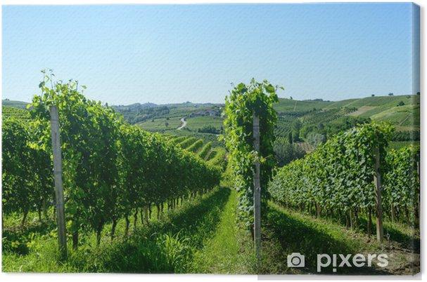 Cuadro en Lienzo Paisaje de verano en Langhe (Italia) - Agricultura