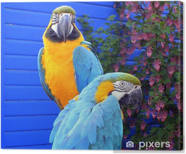 Cuadro en Lienzo Pájaros exóticos - Guacamayos - Aves