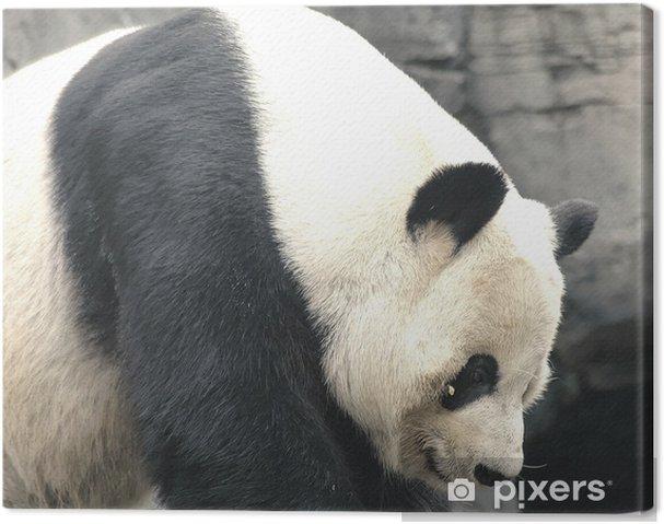 Cuadro en Lienzo Panda - Temas