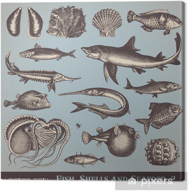 Cuadro en Lienzo Peces, conchas y mariscos (serie 2) - varias ilustraciones de época - Texturas