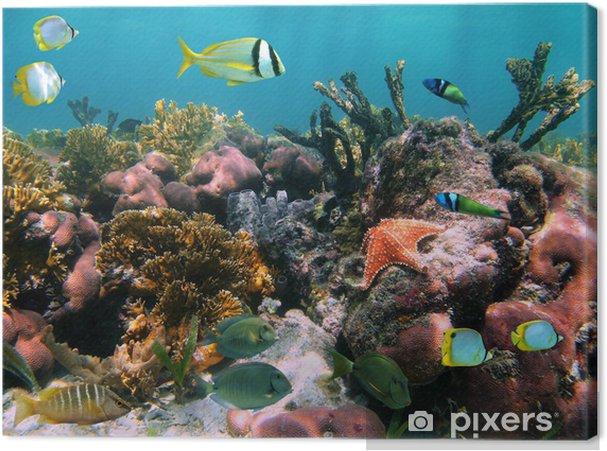 Cuadro en Lienzo Peces tropicales en los corales - Temas