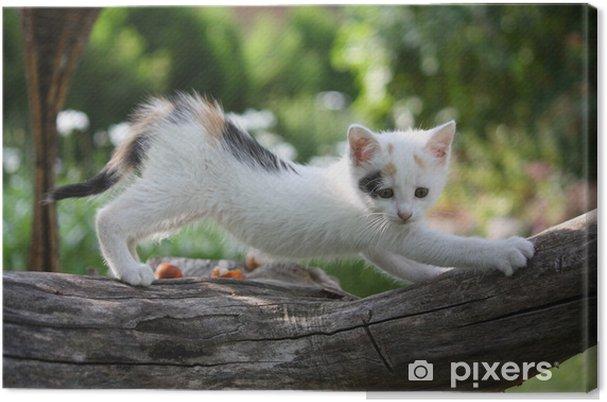 Cuadro en Lienzo Pequeño gatito blanco rascarse rama de un árbol - Temas