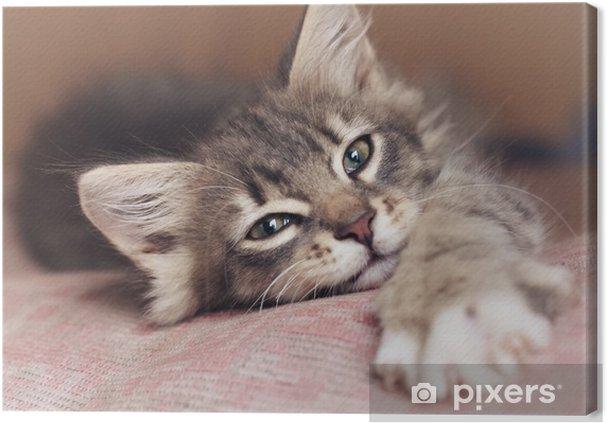Cuadro en Lienzo Pequeño gatito - Temas