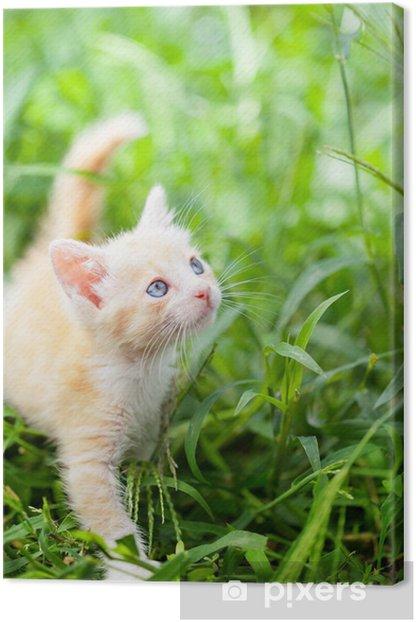 Cuadro en Lienzo Pequeño gato rojo - Temas