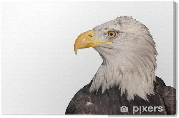 Cuadro en Lienzo Perfil de la cabeza aislada de un águila calva ...
