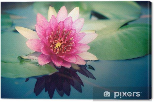 Cuadro en Lienzo Pink lotus - Flores