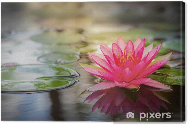 Cuadro en Lienzo Pink lotus -