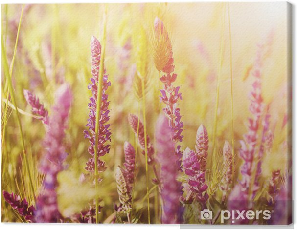 Cuadro en Lienzo Prado de flores violeta -
