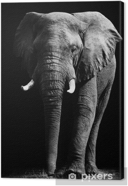 Cuadros en lienzo premium Elefante aislado en el fondo negro -