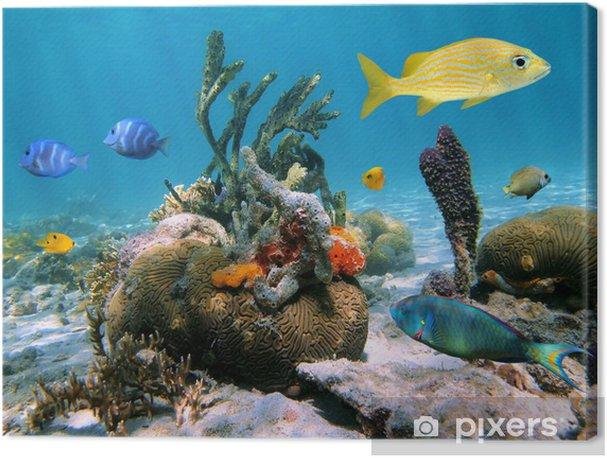Cuadros en lienzo premium Underwater Sea-Life - Temas