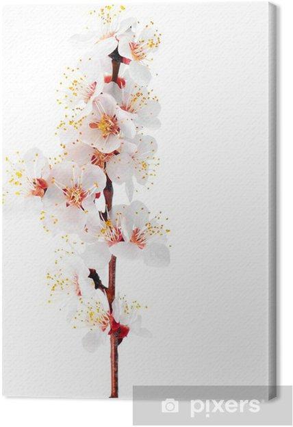 Cuadro En Lienzo Rama Con Flores Aislado Sobre Fondo Blanco