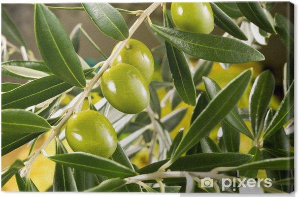 Cuadro en Lienzo Rama de olivo - Aceitunas