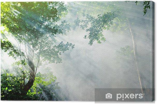 Cuadro en Lienzo Rayo de sol tropical hermosa mañana de bosque - Plantas