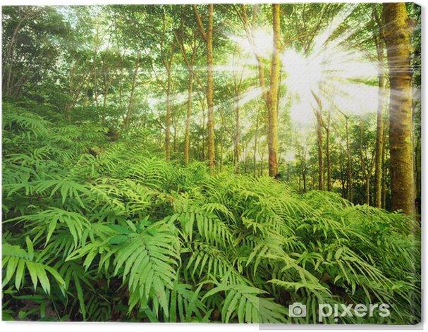 Cuadro en Lienzo Rayos del sol en el bosque - Temas