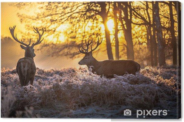Cuadro en Lienzo Red deer - Temas