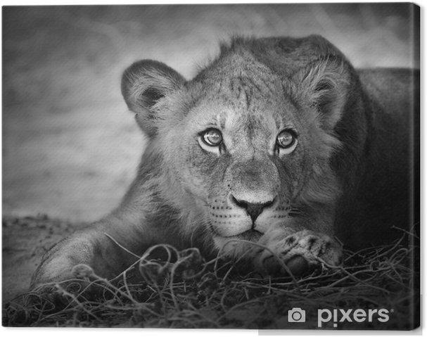 Cuadro en Lienzo Retrato de joven león -