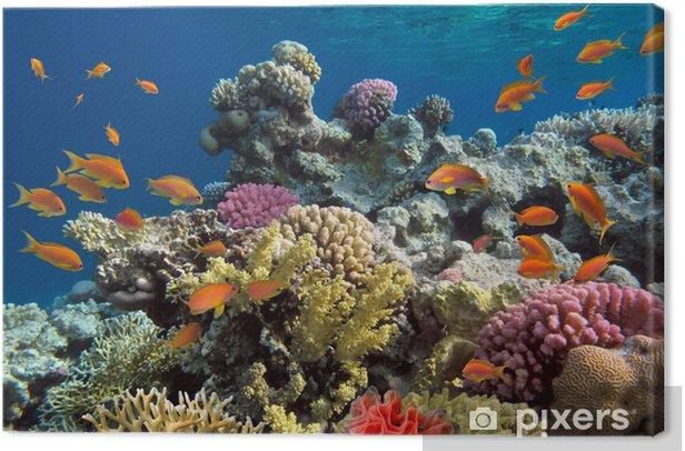 Cuadro en Lienzo Rodaje submarino de los arrecifes de coral vivo con peces de un - Arrecife de coral