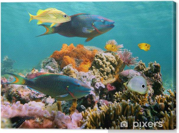 Cuadro en Lienzo Sealife submarino multicolor - Temas