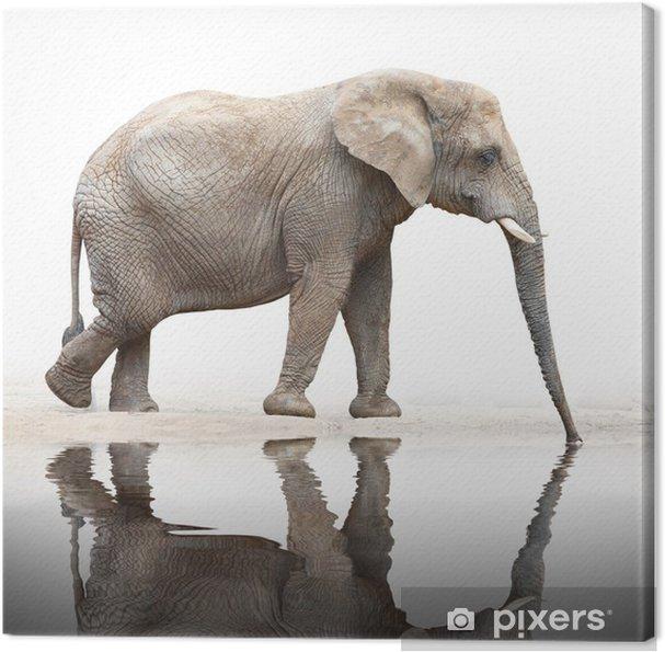 Cuadro en Lienzo Sed para beber elefante a partir del estanque. - Temas