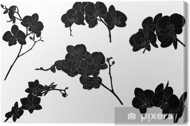 Cuadro En Lienzo Seis Ramas De Orquideas Negras Sobre Fondo Blanco