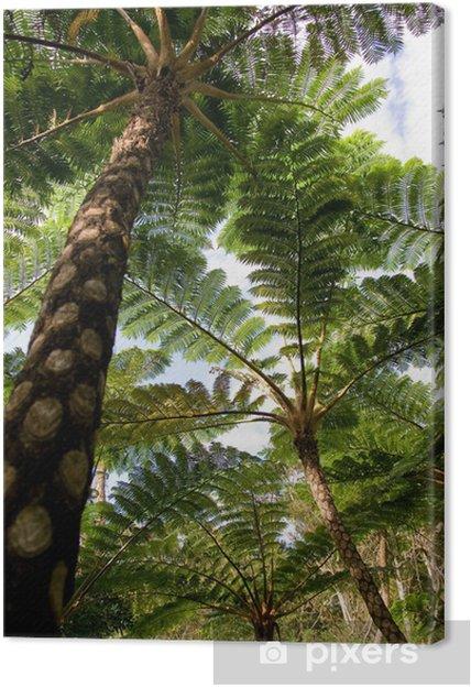 Cuadro en Lienzo Selva de lepifera cyathea, - Temas