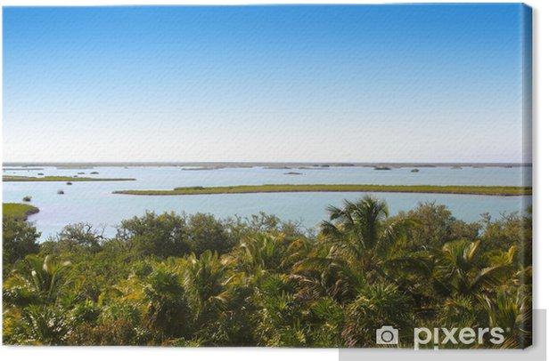Cuadro en Lienzo Selva de manglar laguna de la selva de la palmera - América