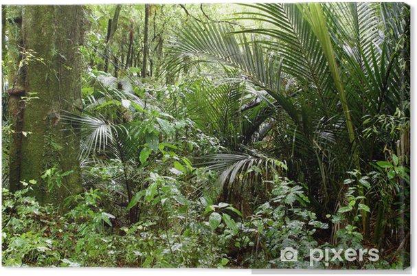 Cuadro en Lienzo Selva - Temas