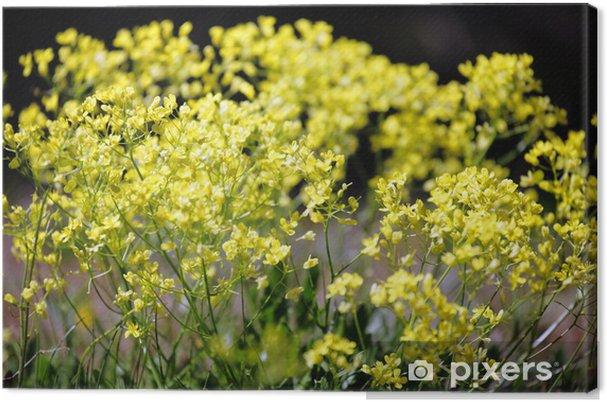 Cuadro En Lienzo Silvestres Flores Amarillas Pixers Vivimos