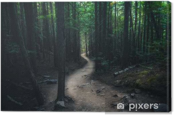 Cuadro en Lienzo Sinuoso sendero en el bosque. - Paisajes