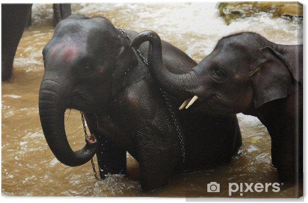 Cuadro en Lienzo Tailandia, Chiang Mai: Baño del elefante - Asia