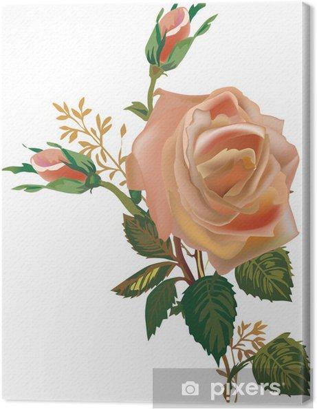Cuadro en Lienzo Tea Rose flor aislada en blanco - Temas