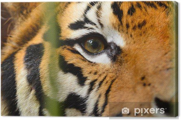 Cuadro en Lienzo Tiger eye - Temas