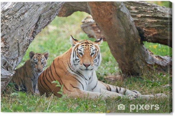 Cuadro en Lienzo Tigre de Bengala Panthera tigris tigris - Temas