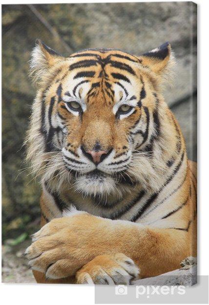 Cuadro en Lienzo Tigre - Temas
