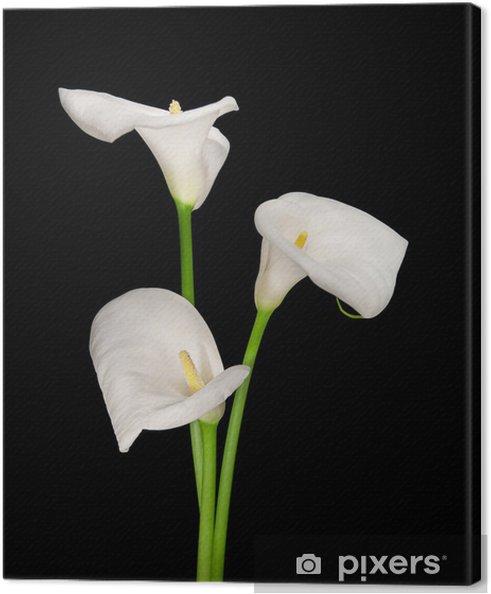 Cuadro en Lienzo Tres calas blancas aislados en negro - Flores