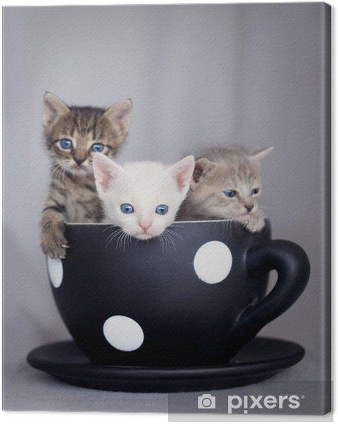 Cuadro en Lienzo Tres gatitos que se sientan en la taza grande - Temas