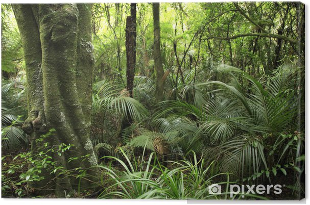 Cuadro en Lienzo Tropical forest - Temas